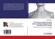 Copertina di The Human Adult clavicle Bone-A Morphological And Morphometric Study