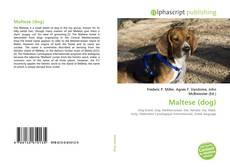 Bookcover of Maltese (dog)