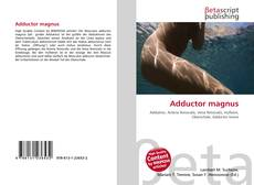 Couverture de Adductor magnus