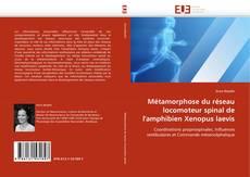 Buchcover von Métamorphose du réseau locomoteur spinal de l'amphibien Xenopus laevis