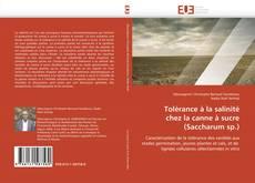 Bookcover of Tolérance à la salinité  chez la canne à sucre  (Saccharum sp.)