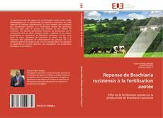 Reponse de Brachiaria ruziziensis à la fertilisation azotée的封面