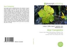 Acer Campestre的封面