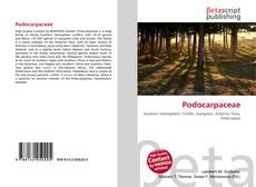 Bookcover of Podocarpaceae