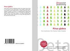 Bookcover of Pinus glabra