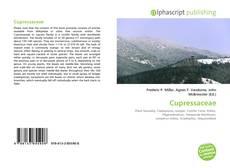 Bookcover of Cupressaceae