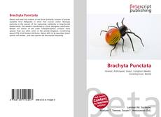 Bookcover of Brachyta Punctata