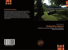 Обложка Endiandra pubens