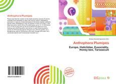 Borítókép a  Anthophora Plumipes - hoz