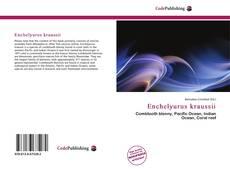 Bookcover of Enchelyurus kraussii
