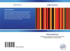 Bookcover of Chamaedorea