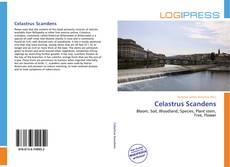 Bookcover of Celastrus Scandens