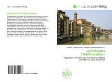 Bookcover of Aphelandra Stephanophysa