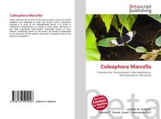 Bookcover of Coleophora Marcella