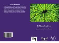 Bookcover of Peltigera Scabrosa