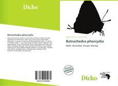 Обложка Batrachedra phorcydia