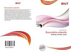 Bookcover of Bucculatrix cidarella