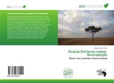 Couverture de Acacia Coriacea subsp. Sericophylla