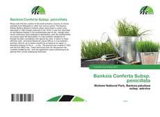Обложка Banksia Conferta Subsp. penicillata