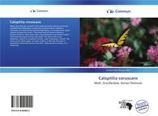 Copertina di Caloptilia coruscans