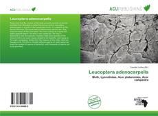 Bookcover of Leucoptera adenocarpella