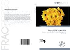 Bookcover of Calandrinia Calyptrata