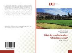 Bookcover of Effet de la salinité chez 'Medicago sativa'