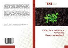 Bookcover of L'effet de la salinité sur l'amandier (Prunus amygdalus)