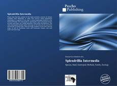 Capa do livro de Splendrillia Intermedia