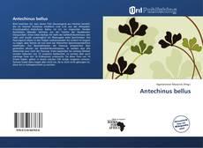 Capa do livro de Antechinus bellus