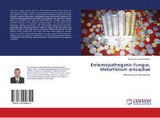Bookcover of Entomopathogenic Fungus, Metarhizium anisopliae