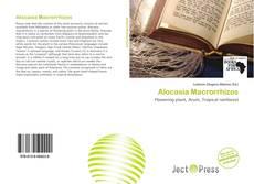 Обложка Alocasia Macrorrhizos