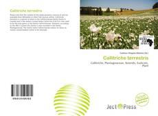 Bookcover of Callitriche terrestris