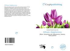 Allium Amplectens kitap kapağı