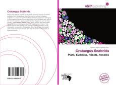 Bookcover of Crataegus Scabrida