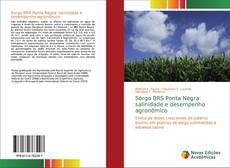 Copertina di Sorgo BRS Ponta Negra: salinidade e desempenho agronômico