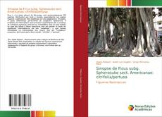 Borítókép a  Sinopse de Ficus subg. Spherosuke sect. Americanae: citrifolia/pertusa - hoz