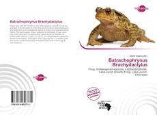 Borítókép a  Batrachophrynus Brachydactylus - hoz