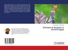 Portada del libro de Ostriches & Hoopoes in Ancient Egypt