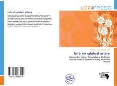 Copertina di Inferior gluteal artery