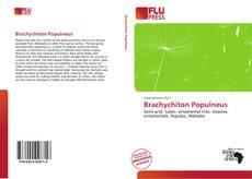 Bookcover of Brachychiton Populneus
