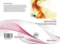 Bookcover of Antennal Lobe