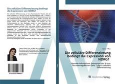 Bookcover of Die zelluläre Differenzierung bedingt die Expression von NDRG1