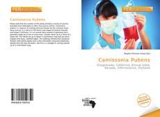 Bookcover of Camissonia Pubens