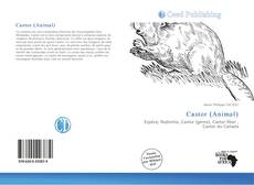 Bookcover of Castor (Animal)