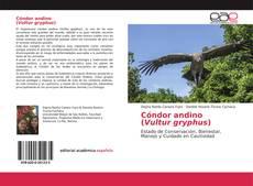 Copertina di Cóndor andino(Vultur gryphus)