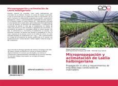 Capa do livro de Micropropagación y aclimatación de Laelia halbingeriana