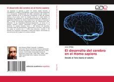 El desarrollo del cerebro en el Homo sapiens的封面