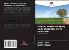 Обложка Effet du rhizobium Brady et du phosphore sur le rendement