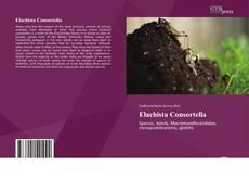 Bookcover of Elachista Consortella